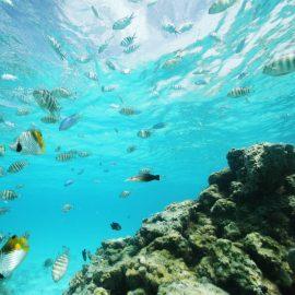 Sofitel Bora Bora Marara Beach Resort Discovery by Sofitel