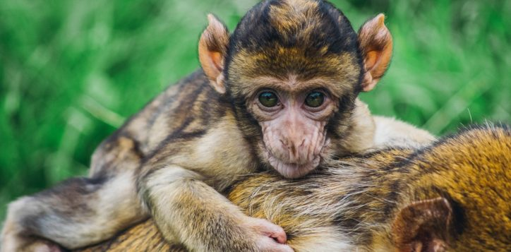 monkeys-a-primate-story