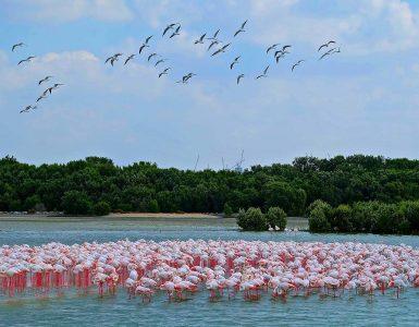 ras-al-khor-wildlife-sanctuary