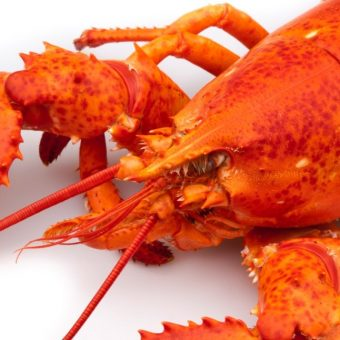 free-canadian-lobster