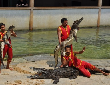 samut-prakan-crocodile-farm