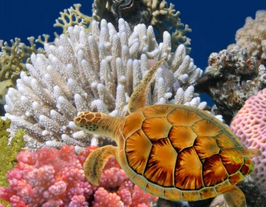 bangkok-sea-life-ocean-world