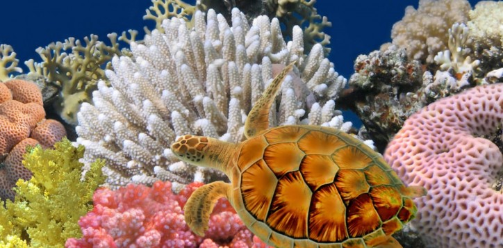 bangkok-sea-life-ocean-world