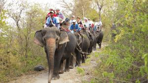 hutsadin-elephant-foundation