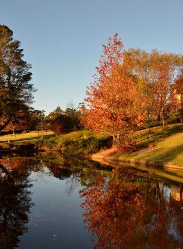 autumn-mid-week-saver