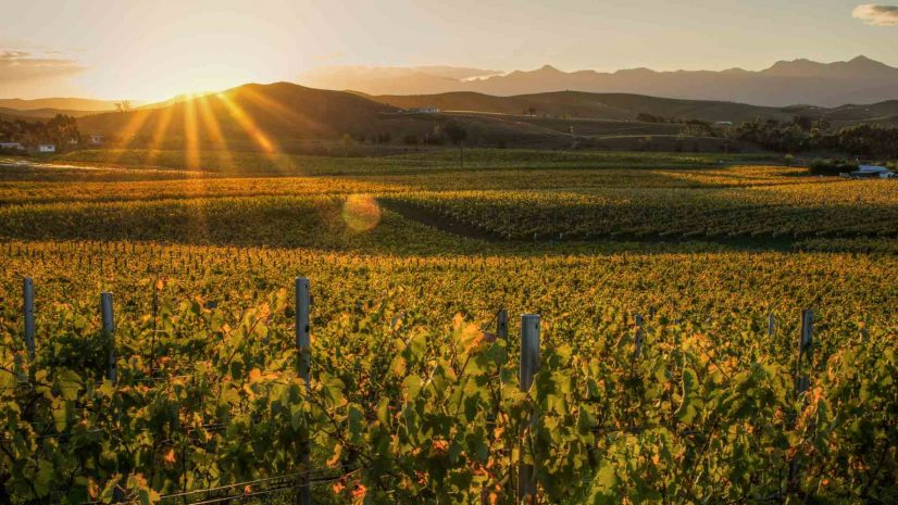 new-zealand-wine-masterclass