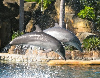 sea-world-gold-coast