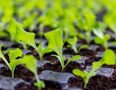 sustainability-planet-21