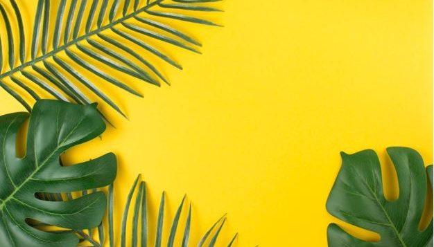 palm-yllw-backdrop