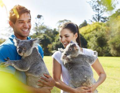 lone-pine-koala-sanctuary