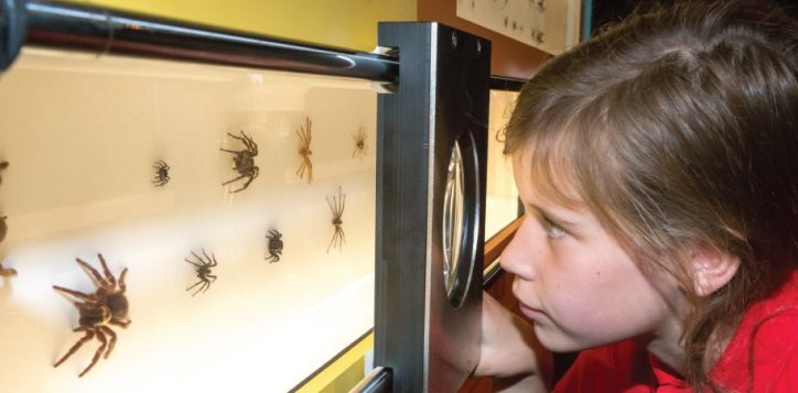 spiders-at-the-qld-museum