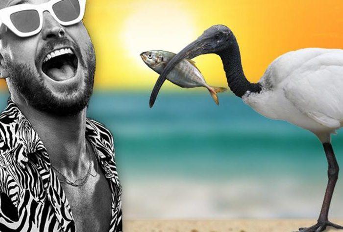 fisher-australian-beach-party-tour