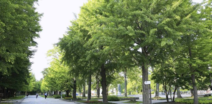 nakajima-park
