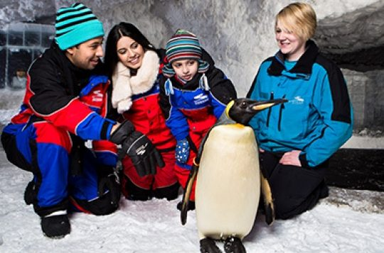 penguin_0