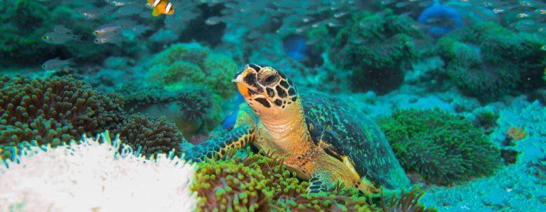 marine-biologist