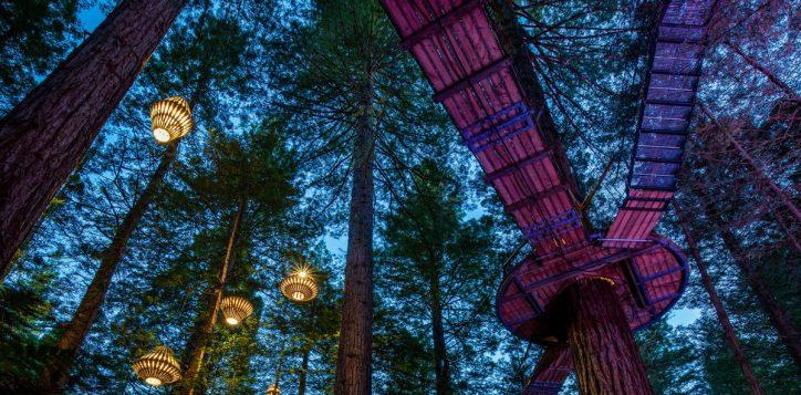 redwoods-night-2