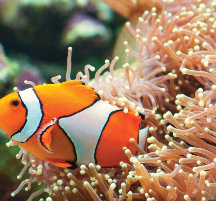 snorkeling-in-phang-nga