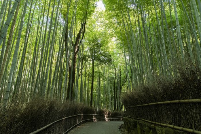 31-nijojo_mgallery_site_arashiyama2
