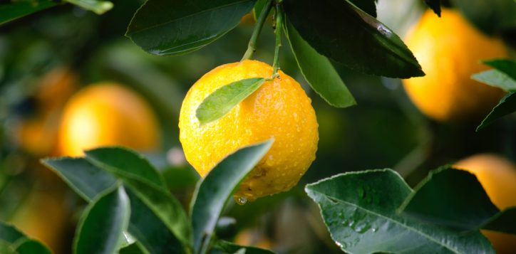 agriculture-citrus-close-up-129574-2