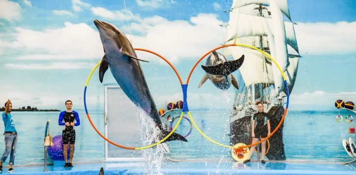 dolphins-bay-phuket