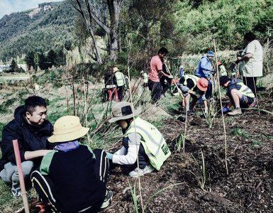 helping-restore-habitats