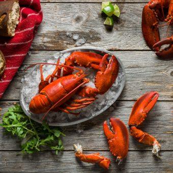 lobster-lover