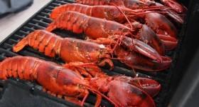 lobster-phuket