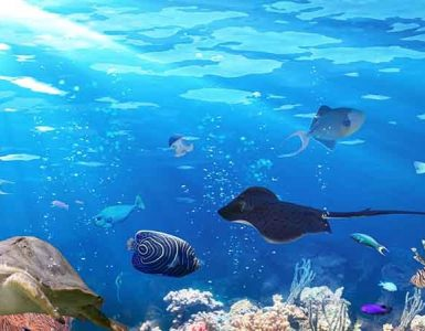 aquaria-phuket-phuket-attractions-pullman-phuket-panwa-beach-resort