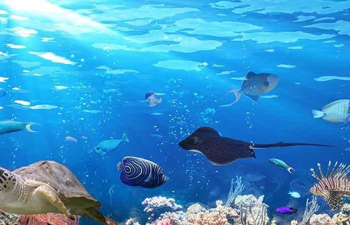 aquaria-phuket-phuket-attractions-pullman-phuket-panwa-beach-resort