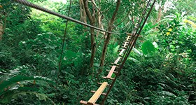 zipline_4_resize-to-280x150-copy