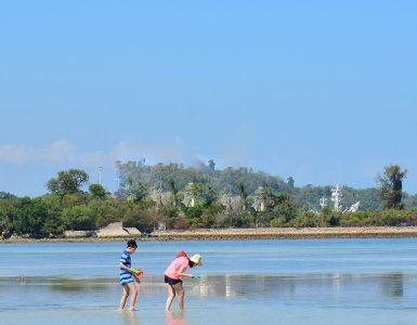 phuket-marine-life