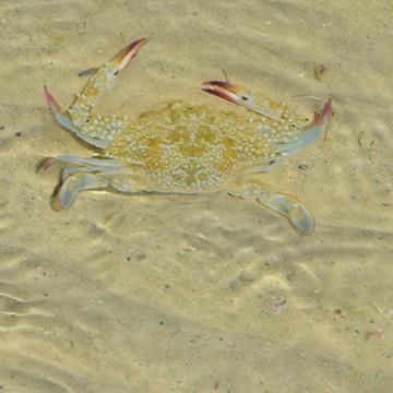 กิจกรรมเดินดูสัตว์ทะเล