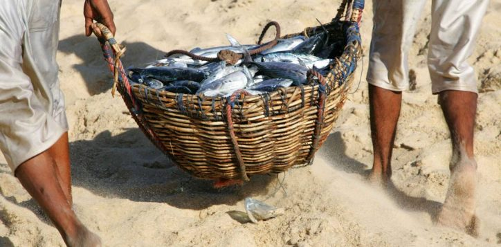basket-of-fish-sml-2