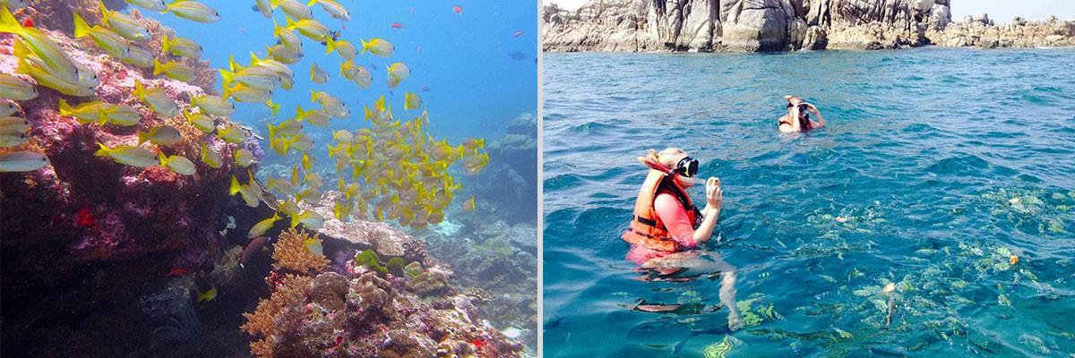 Snorkeling Tour Phuket