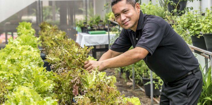 organic-garden-model-sarawut