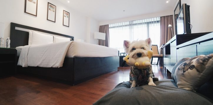 pet-friendly-hotel