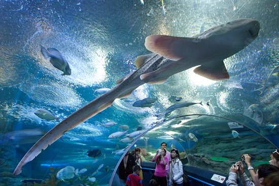 Sealife Bangkok
