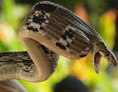 snake-farm