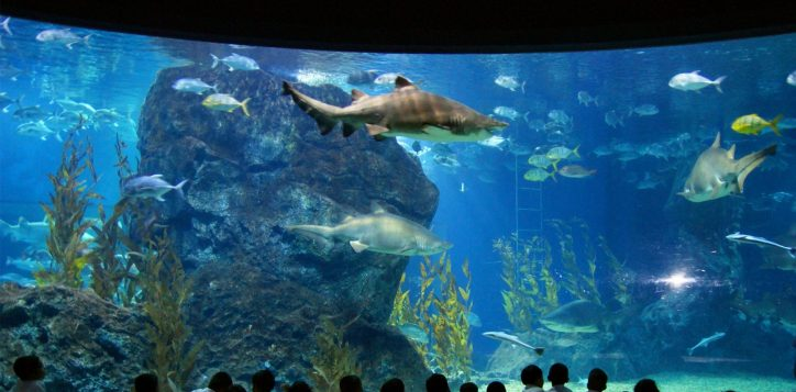 bangkok-sealife_1800-x-1200