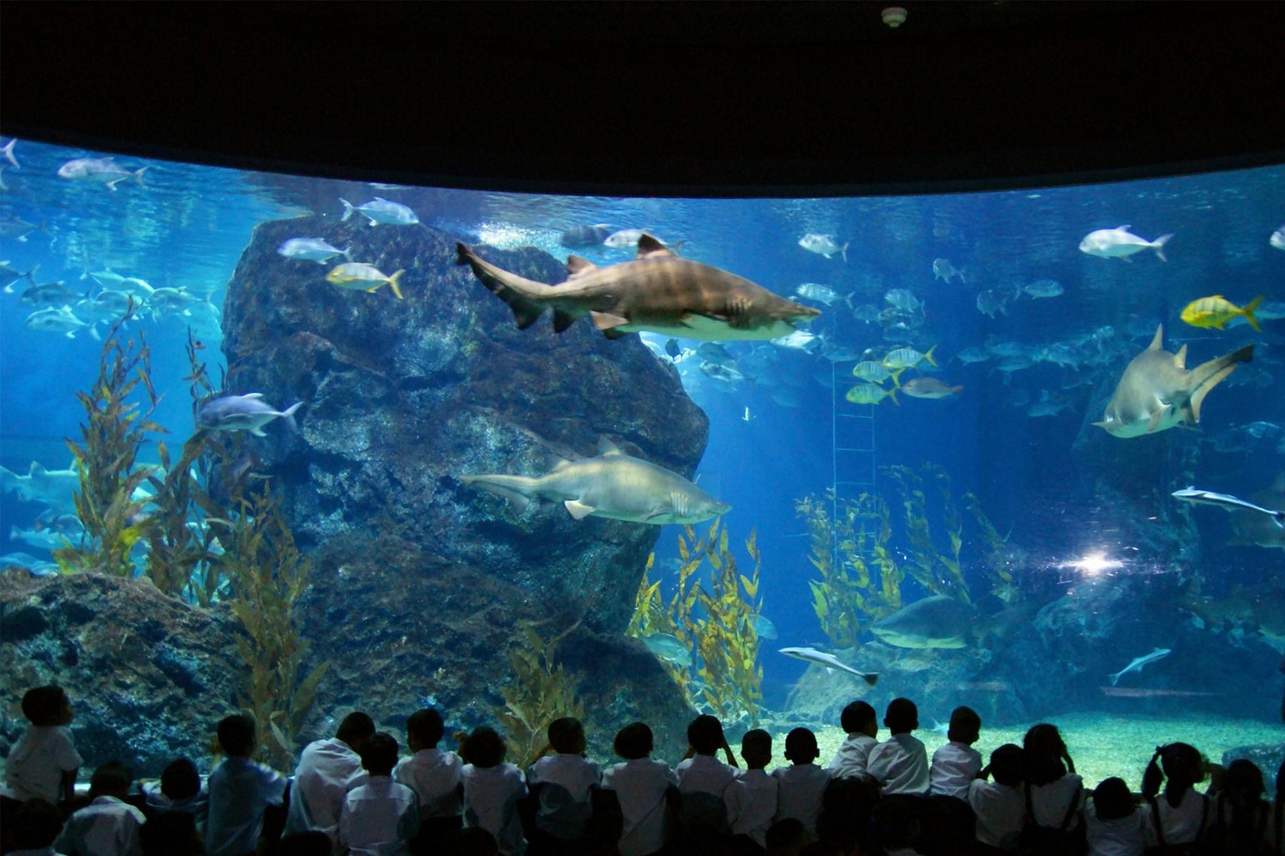 Sea Life Bangkok Ocean World Novotel Bangkok Ploenchit