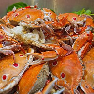 novotel-bangkok-ploenchit-sukhumvit-buffet-promotion_4