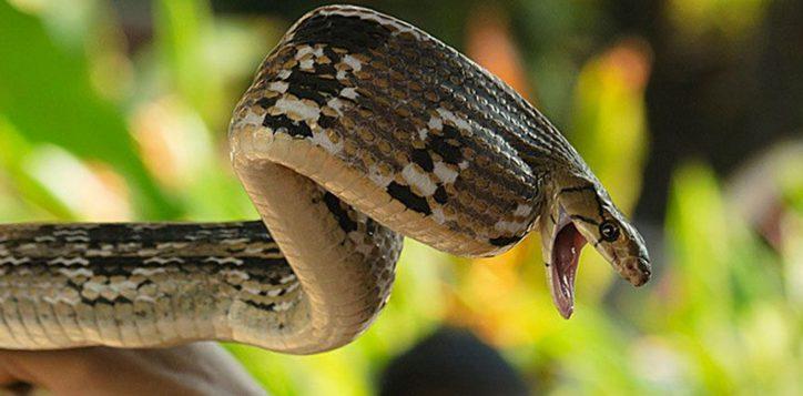 bangkok-snake-farrm