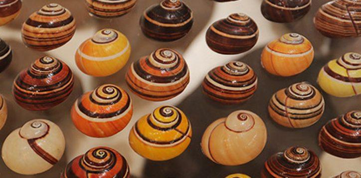 bangkok-seashell-museum