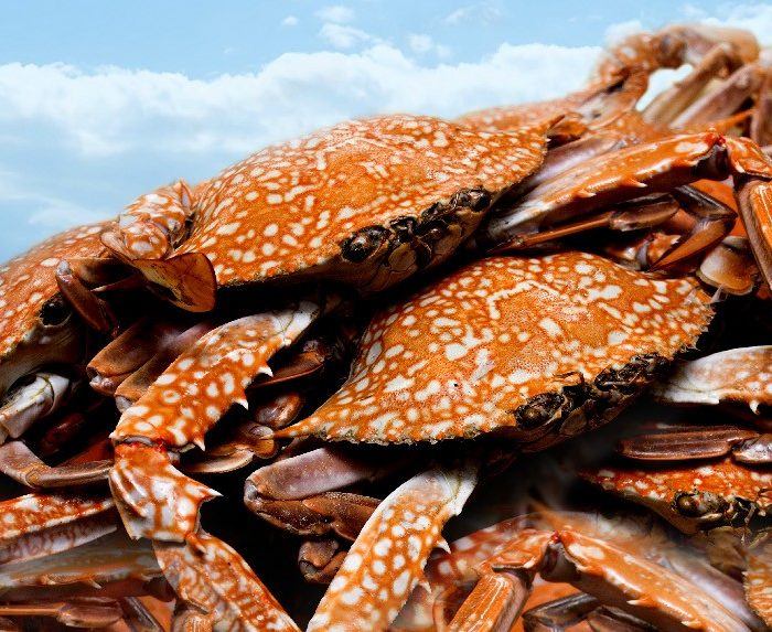 crab-buffet-promotion
