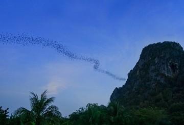 Hua Hin Bat Cave