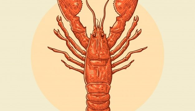 hand-drawn-lobster-illustration_43582-26