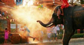 elephant-songkran