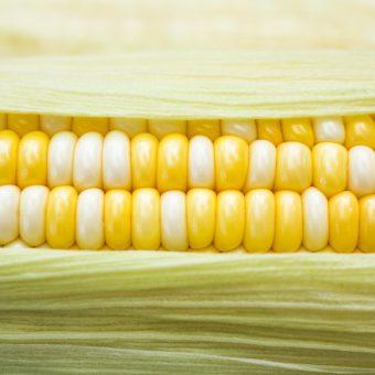 corn-addict-at-lua