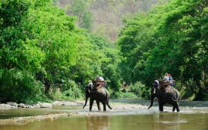 Elephant trekking at Hua Hin as an outdoor activity