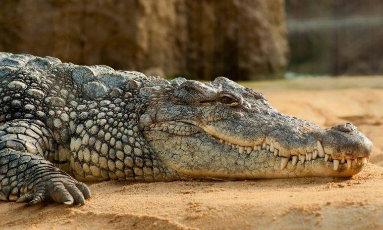 phuket-zoo